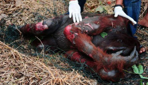 """You've taken everything from us for your palm oil."""