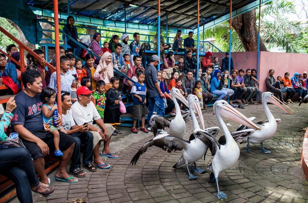 pelican_NYTimes