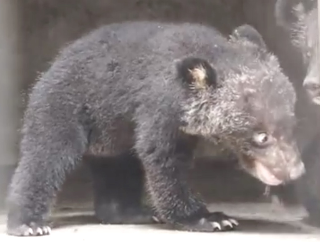 Bear bile farm