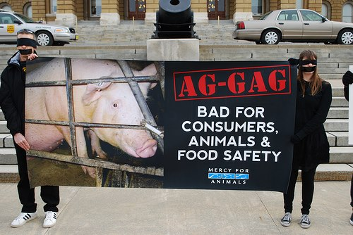 "U.S. Animal rights groups are fighting ""ag-gag"" bills"