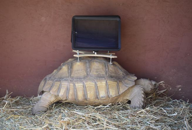 Aspen Art Museum Shuts down  iPad-toting Tortoise Exhibit