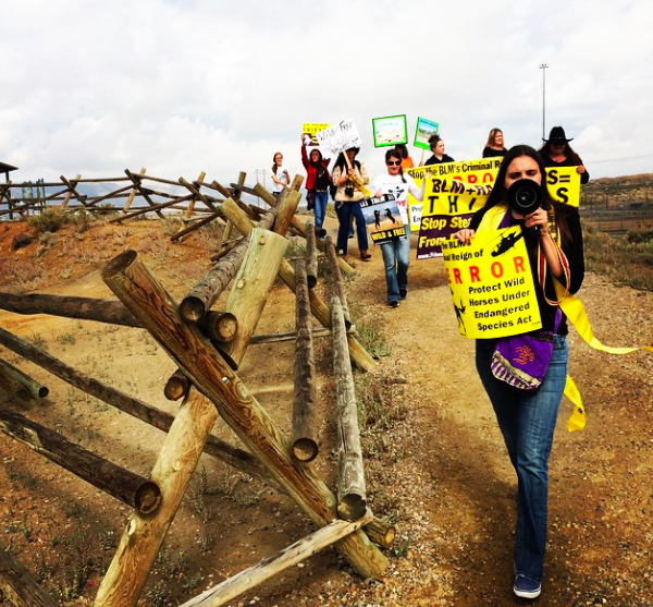 Activists block entrance to horse holding pen