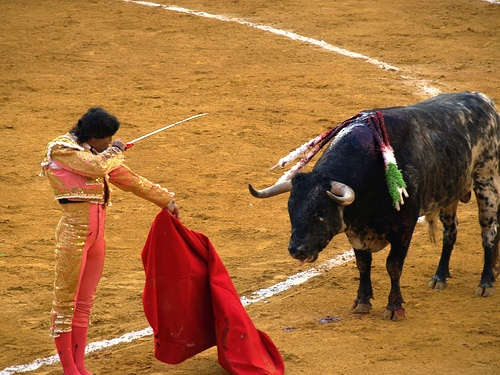 bullfight+animal+rights