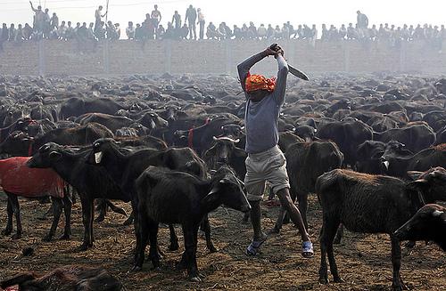 Gadhimai Festival (photo: Gemunu Amarasinghe)