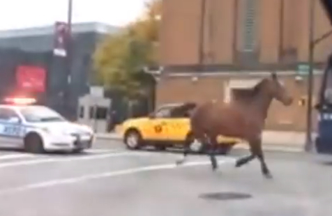 The Mayor made no comment when a carriage horse escaped from his stable and ran down a Manhattan street.