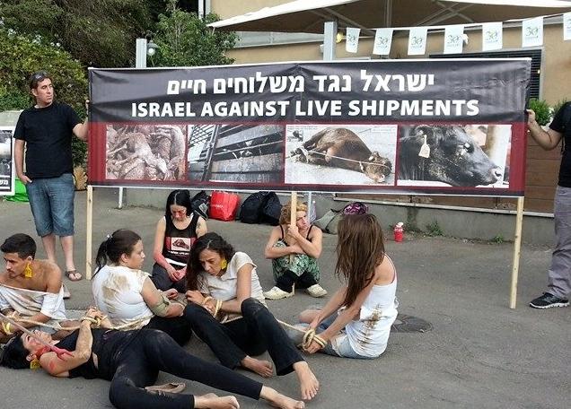 Photo: ישראל נגד משלוחים חיים (Against Live Transports)