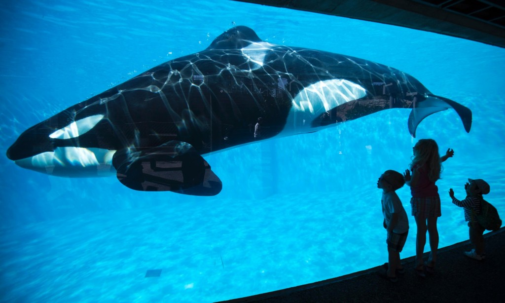 SeaWorld San Diego (photo: Mike Blake/Reuters)