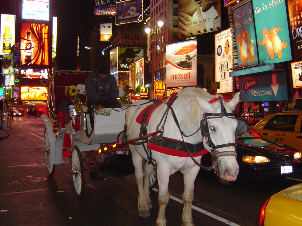 Horses belong in the wild or on pastures, not in Times Square.