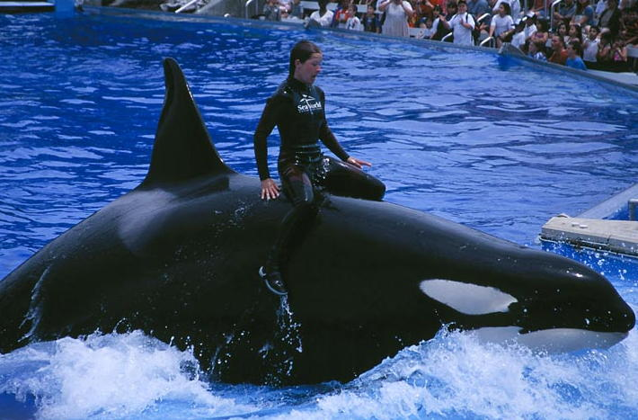 Corky gave birth 7 times in captivity. All of her babies died in a matter of days.