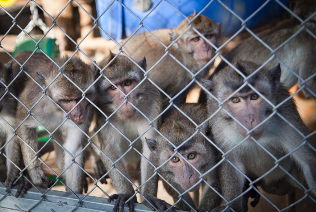Monkey breeding facility