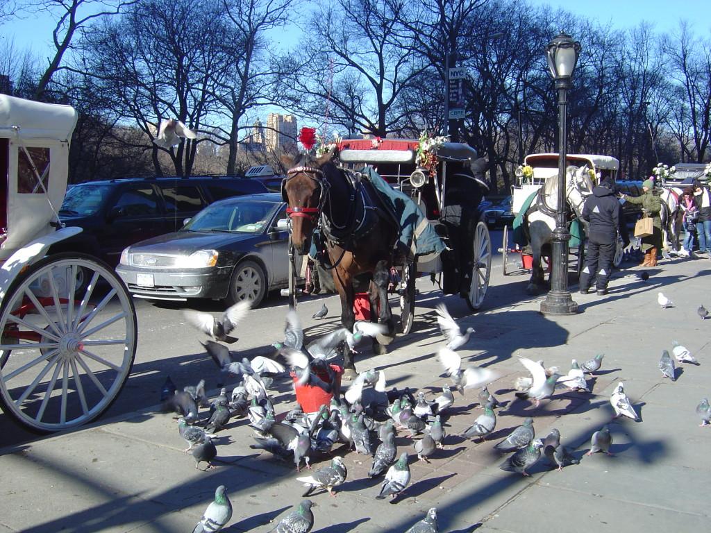 horse pigeon