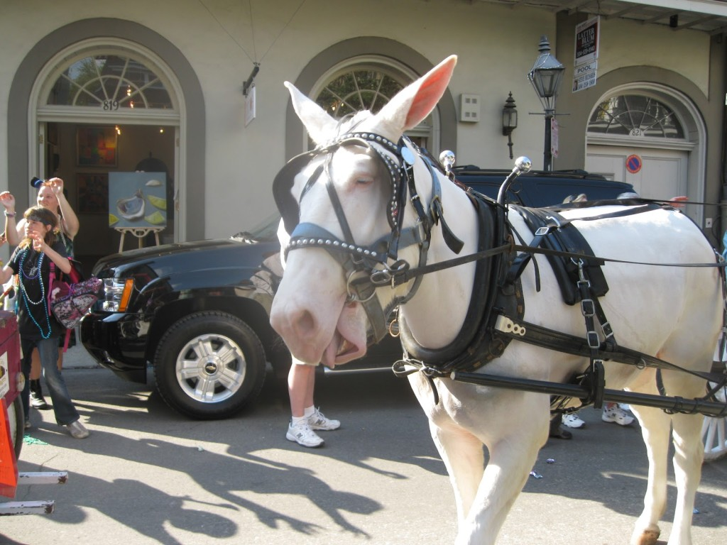 Carriage mule in New Orleans (photo: http://whatssospecialaboutneworleans.blogspot.com)
