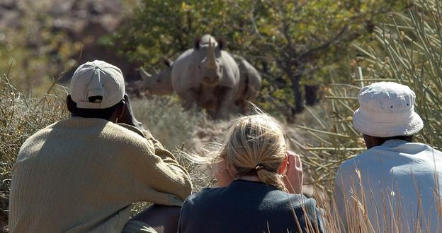Shooting rhinos with cameras