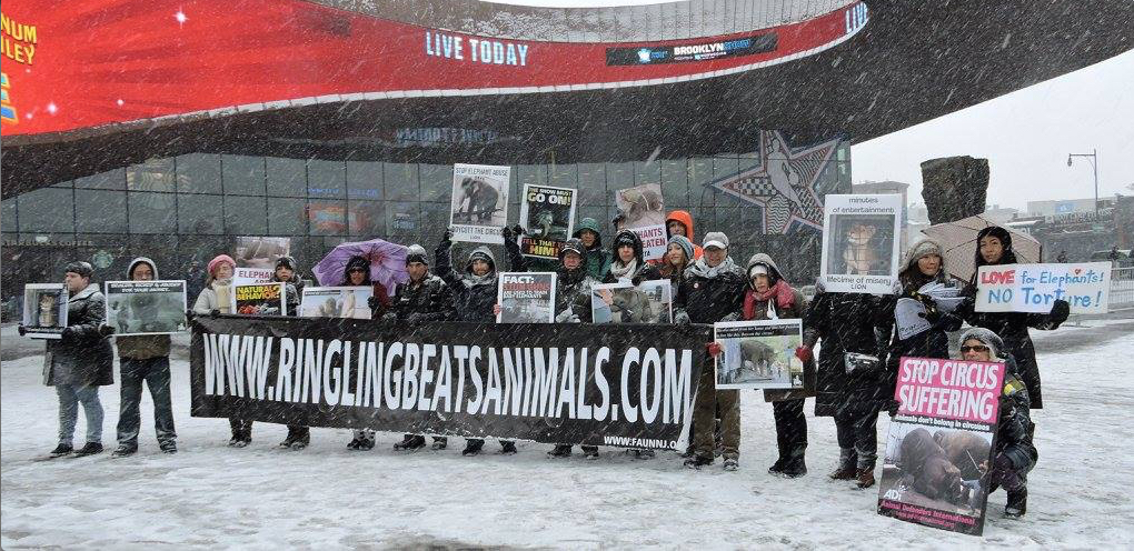 Animal rights activists brave the elements on behalf of the elephants (photo: Miriam Lucille)