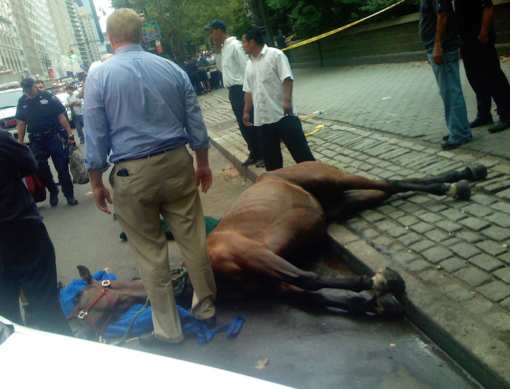 Smoothie crashed into a tree and died after spooking in midtown Manhattan.