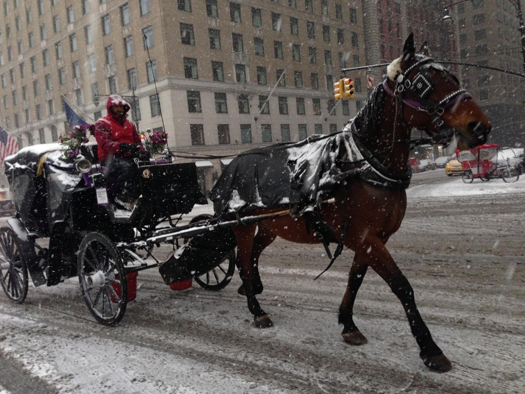 Horse-drawn carriage drivers work during snowstorm in defiance of the law (photo: Bronx resident)