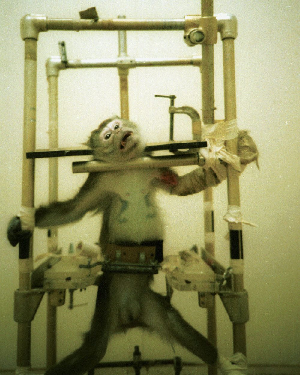 the abuse of animal rights through conducting animal testing Animal rights advocates are pressing government agencies to impose heavy restrictions on animal research but this growing criticism of painful experimentation on.