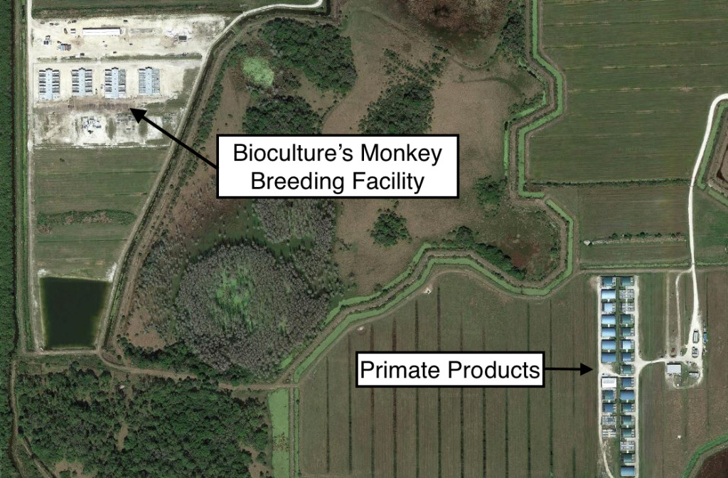Hendry County is the lab monkey breeding capital of the United States
