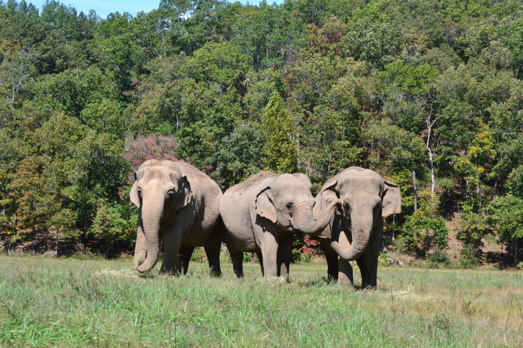 The Elephant Sanctuary in Tennessee would rescue Ringling's elephants