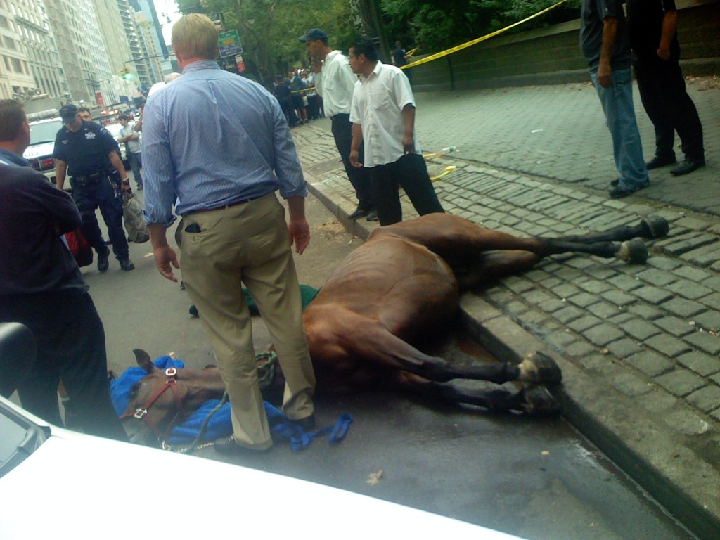 Smoothie crashed into a tree and died after being spooked by a drum in Midtown Manhattan