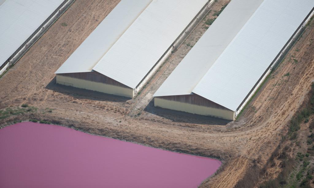 "Waste lagoon at ""Judy's Family Farm"" (photo: Factory Farming Awareness Coalition)"