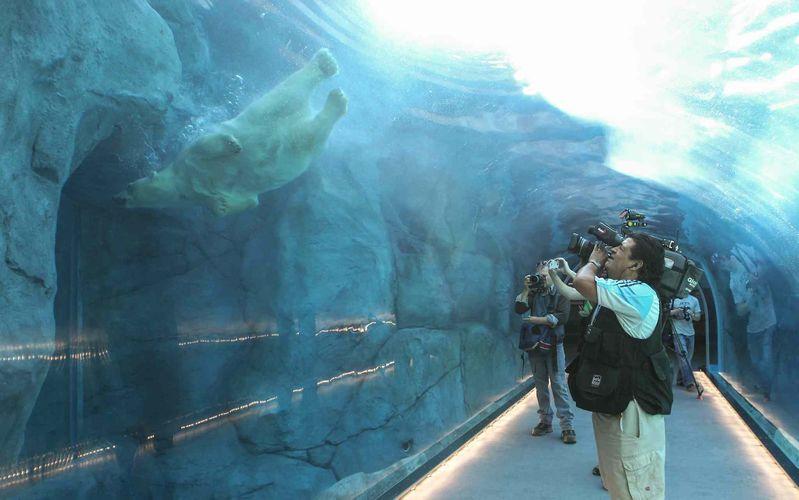 Assiniboine Park Zoo's  polar bear exhibit - where Arturo should be