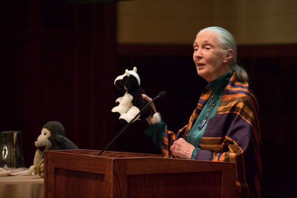 Jane Goodall uses a stuffed cow to point out that methane gas is emitted in cow farts.