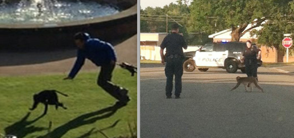 Monkey escapes (photos: BBC, Conway police)