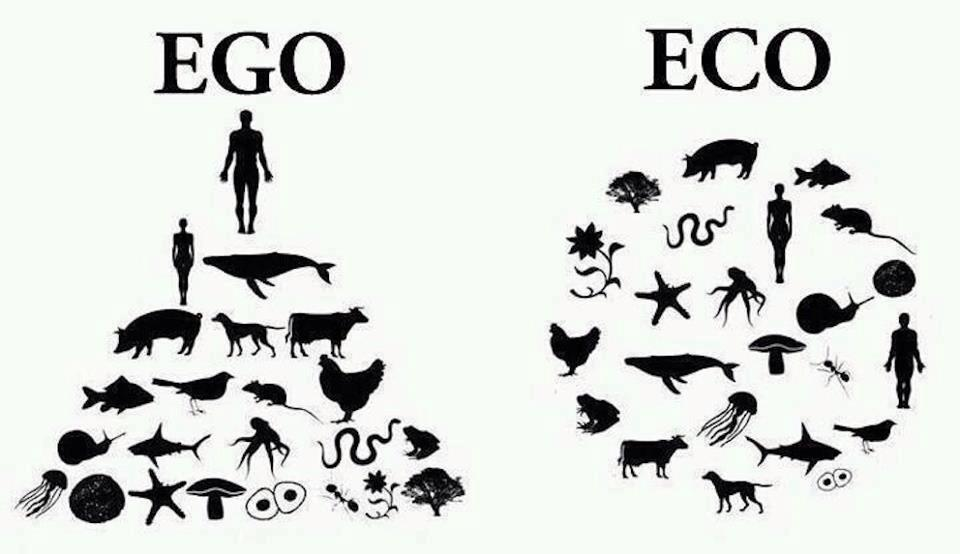 Humans behave as though in charge of - instead of a part of - the planet.