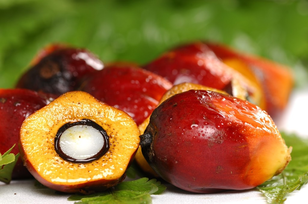Palm oil is extracted from palm fruit that grows on trees in the tropics