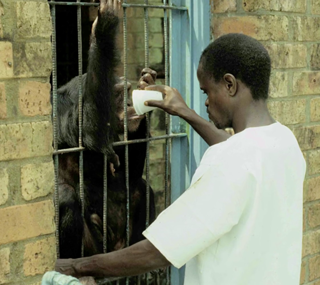 chimp-research-liberia-cage