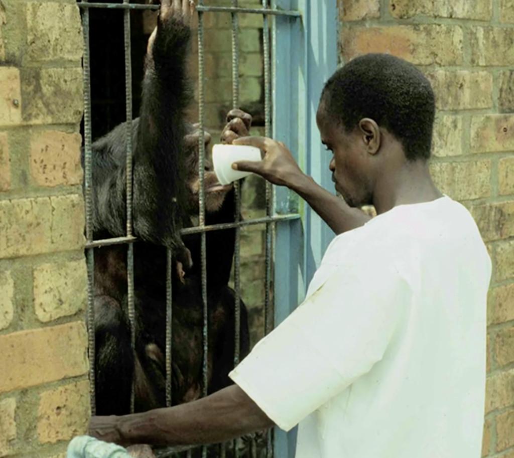 chimp-research-liberia-cage
