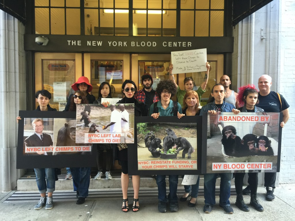 Activists plan to protest until the NY Blood Center reinstates funding for the chimps who they left to die.