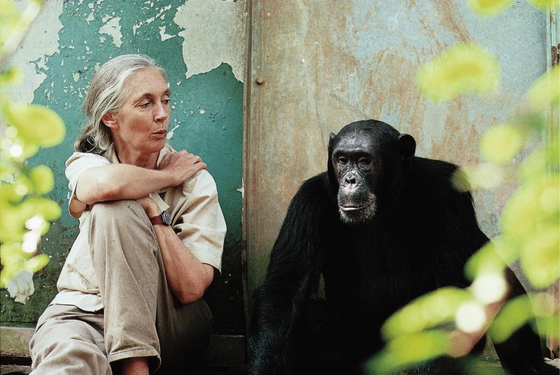 Jane Goodall has expressed outrage at the NYBC's decision to abandon their research chimps