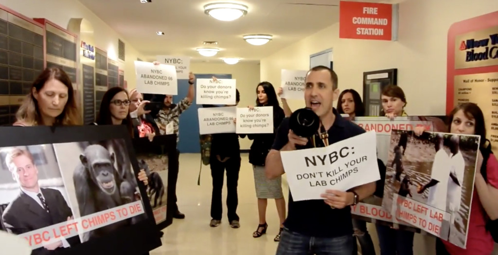 Activists occupy NY Blood Center to Demand that the organizations reinstates funding for lab chimps it abandoned