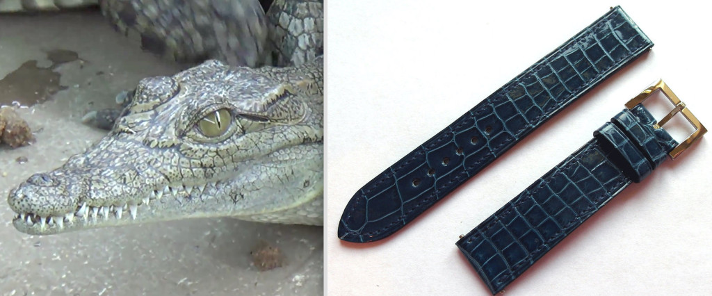 Alligator: before & after