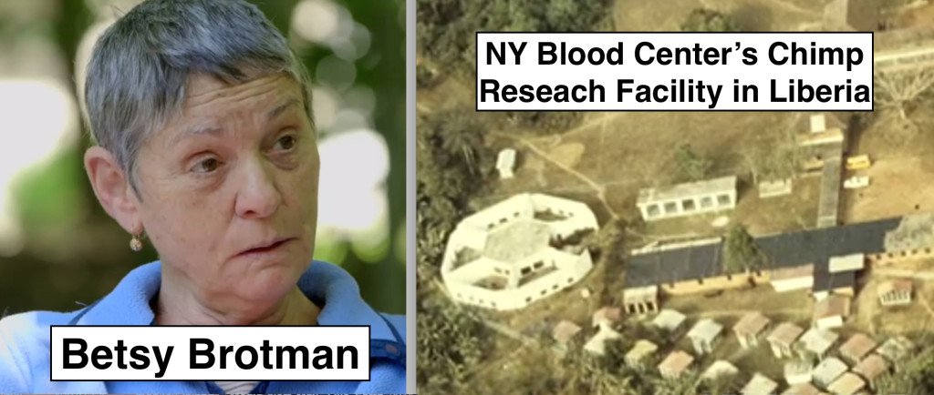 Betsy Brotman ran the NY Blood Center's chimp research facility in Liberia