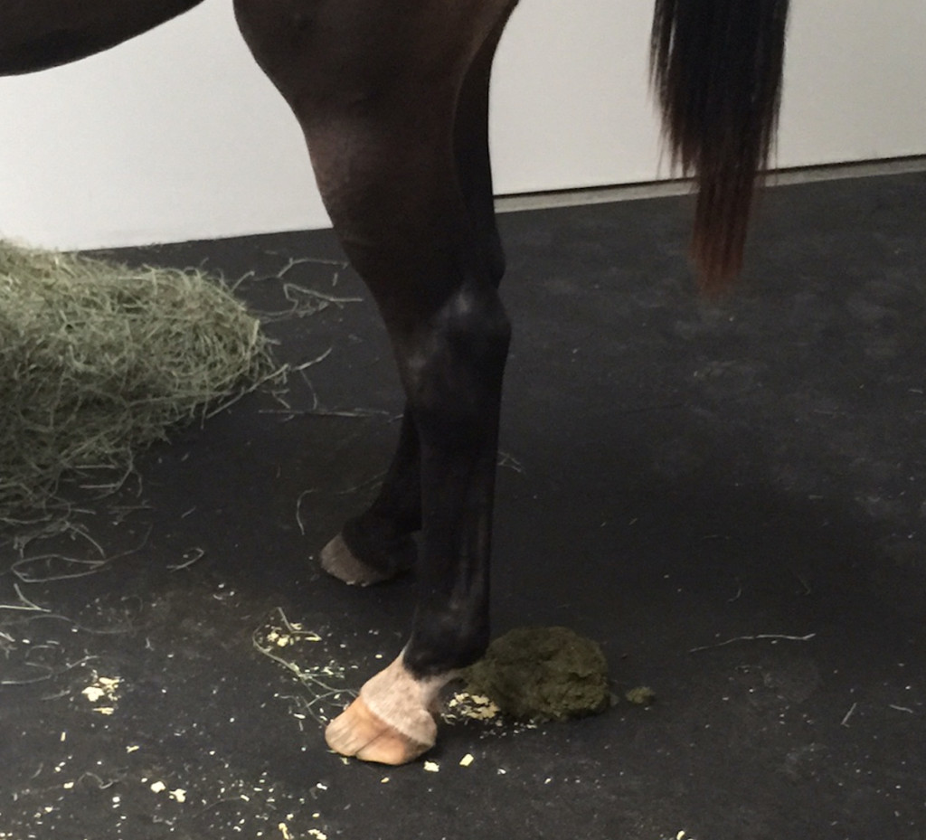 "According to the NY Times, horses ""relieving themselves"" is a part of the experience of the exhibit"