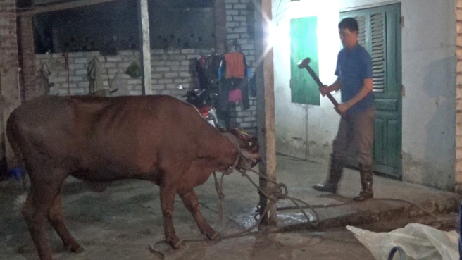 Vietnamese workers slaughter Australian cattle with sledgehammers