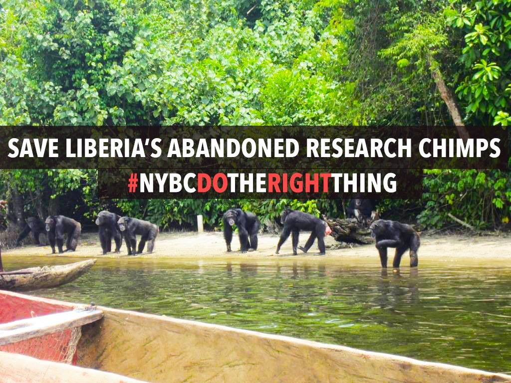 save-the-NYBC-chimps