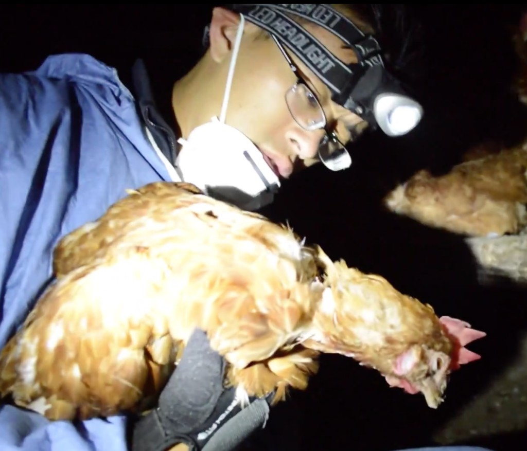 "Wayne Hsiung shines a light on cruelty of ""humanely raised"" hens in a factory farm"