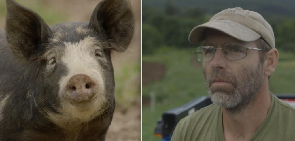 Last-Pig-Comis