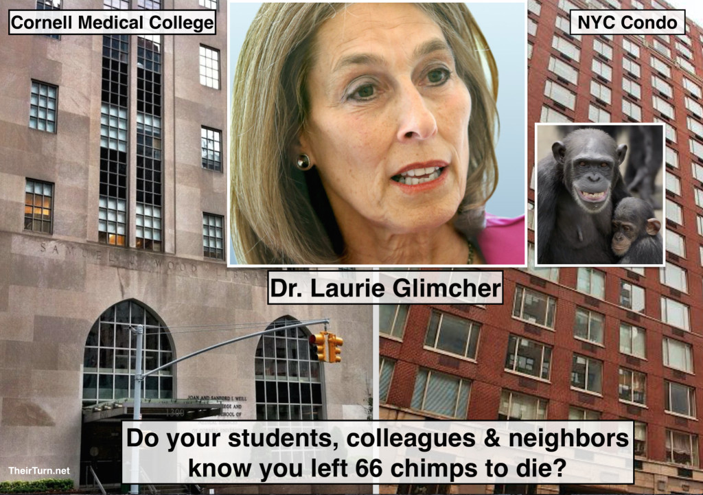By leaving 66 chimps to die of starvation, Dr. Laurie Glimcher has failed to fulfill her promise to abide by the Hippocratic Oath