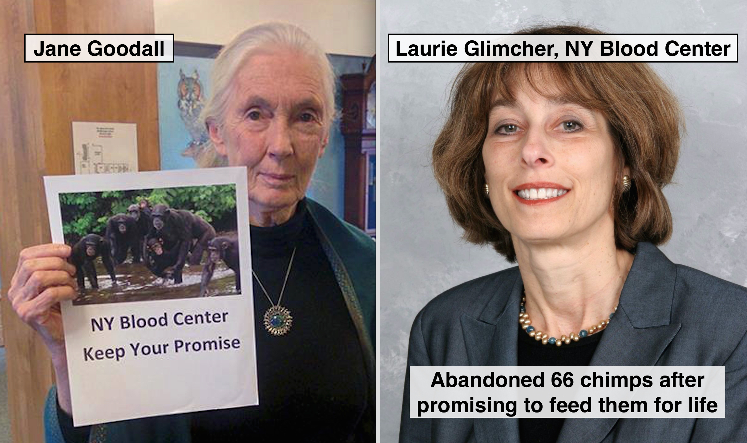 In a letter to the NY Blood Center, Jane Goodall said the organization has a moral obligation to pay for the chimps' care.