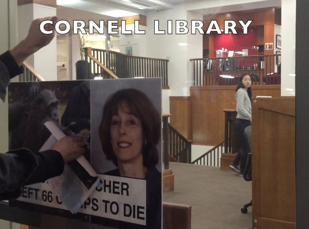 Activists knock on the window at Cornell Medical School's library to ensure that students know that their Dean, Laurie Glimcher, abandoned chimpanzees with no food or water.