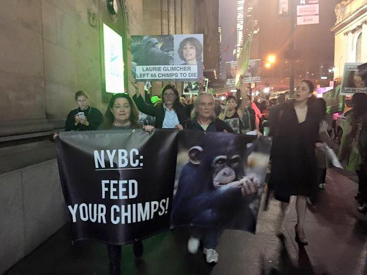 Activists in NYC protest the NY Blood Center and Laurie Glimcher, who served on the board when the decision was made to leave 66 chimps to die