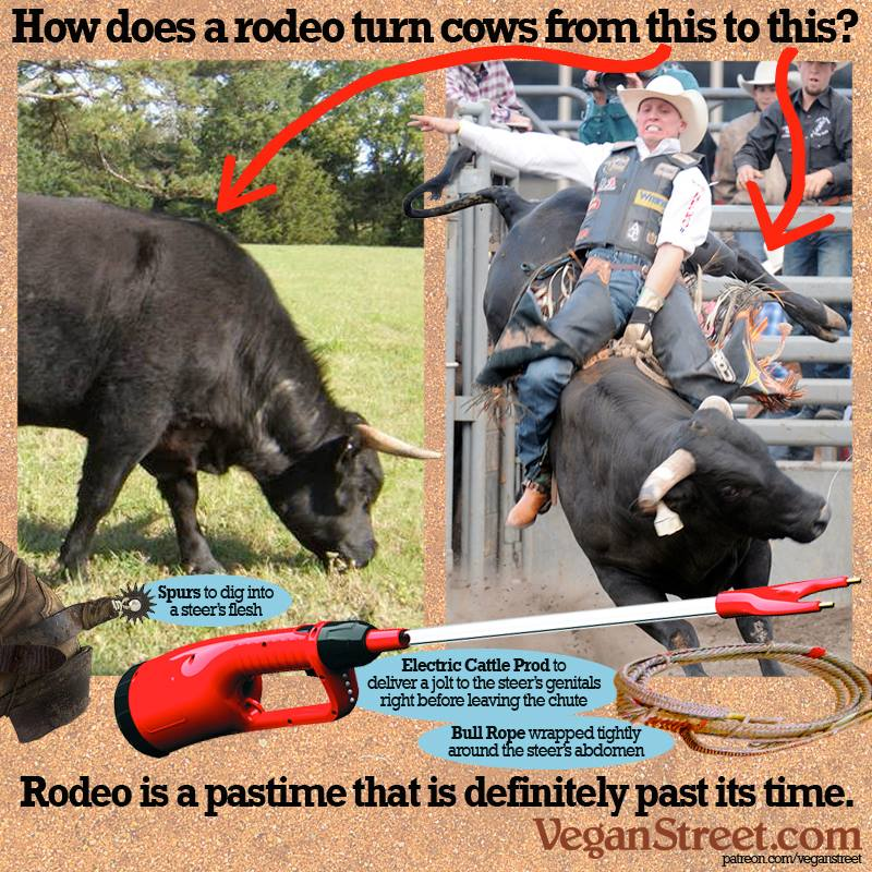 Bull riders use weapons to make the animals buck