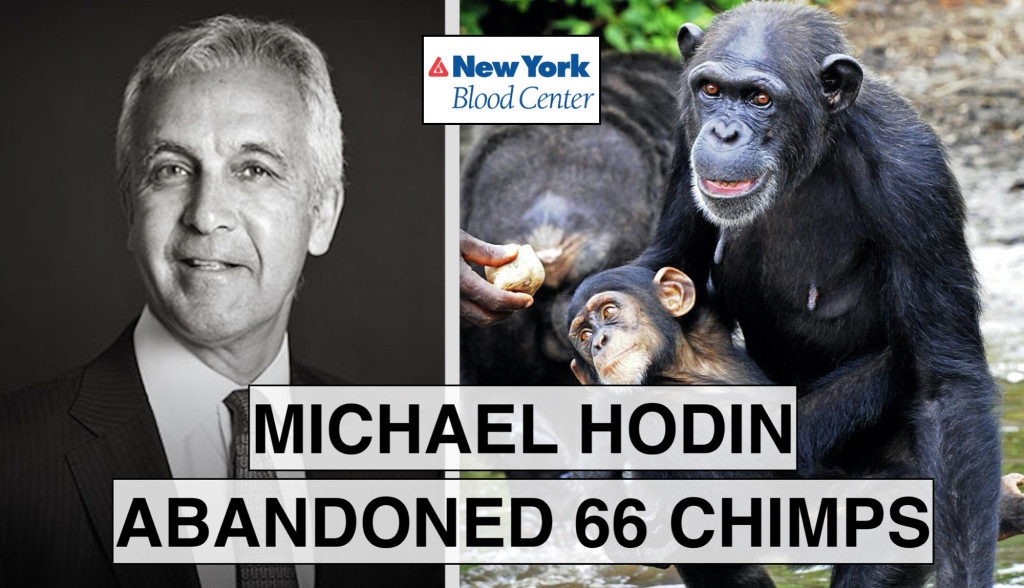 Activists use memes to educate the public about NY Blood Center board members' moral crimes.