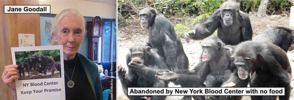 Jane Goodall attempted to meet with the NY Blood Center, but the organization refused.