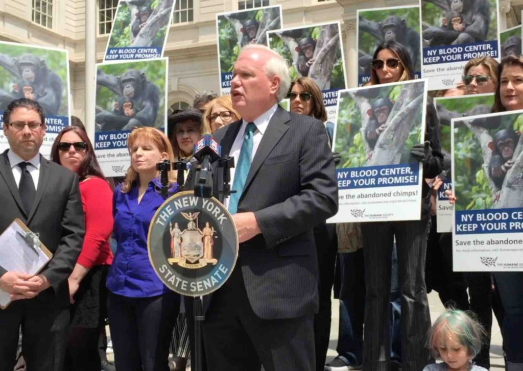 New York State senator Tony Avella addresses a demonstration at city hall demanding that NYBC reinstate funding for the care of the chimpanzees it abandoned.